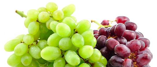 winegear1-copia